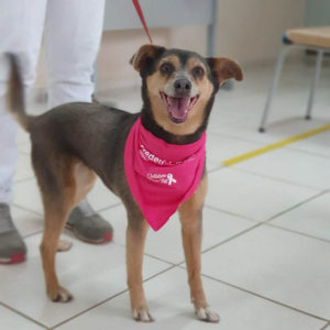The 6th edition of Outubro Rosa Pet, a traditional event promoted by the Veterinary Medicine Course of UniSALESIANO, Araçatuba Brasil